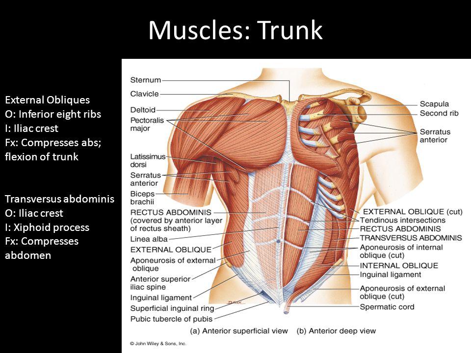 Internal Abdominal Obliques Muscle Tear