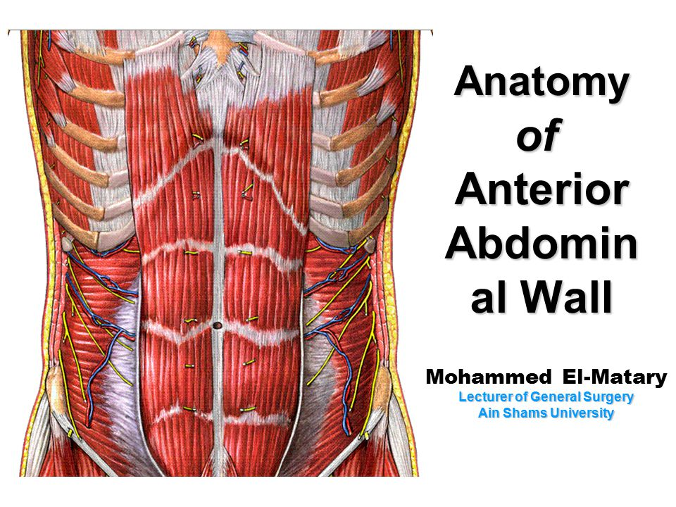 Side View Of External Abdominal Oblique Muscle