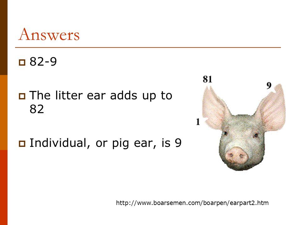 Pig Ear Notches Berkshire Pedigree Pig Ear Notch Notching Dittisham