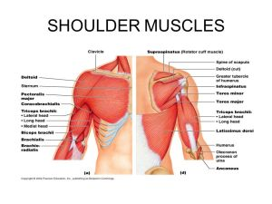 THE MUSCULAR SYSTEM  ppt video online download