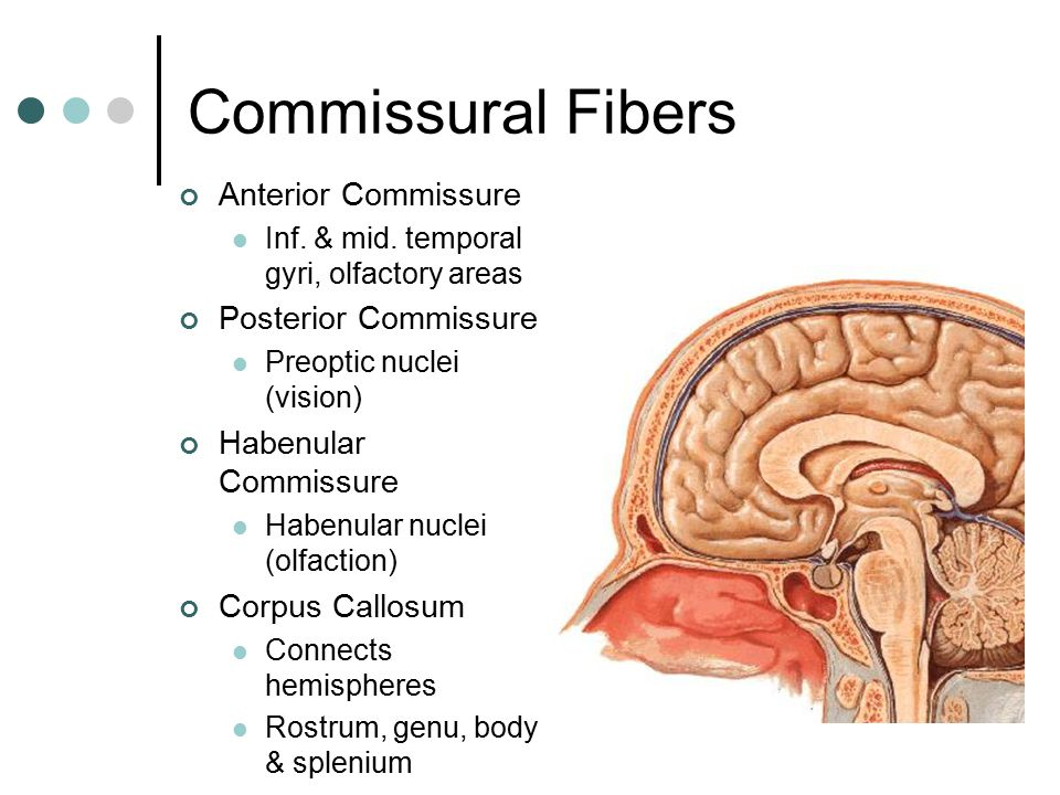 Image result for Commissural fibers: