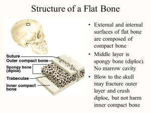 Chapter 7 Bone Tissue Tissues and ans of the skeletal