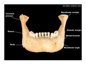 Frontal bone Nasal bone Glabella Lacrimal bone