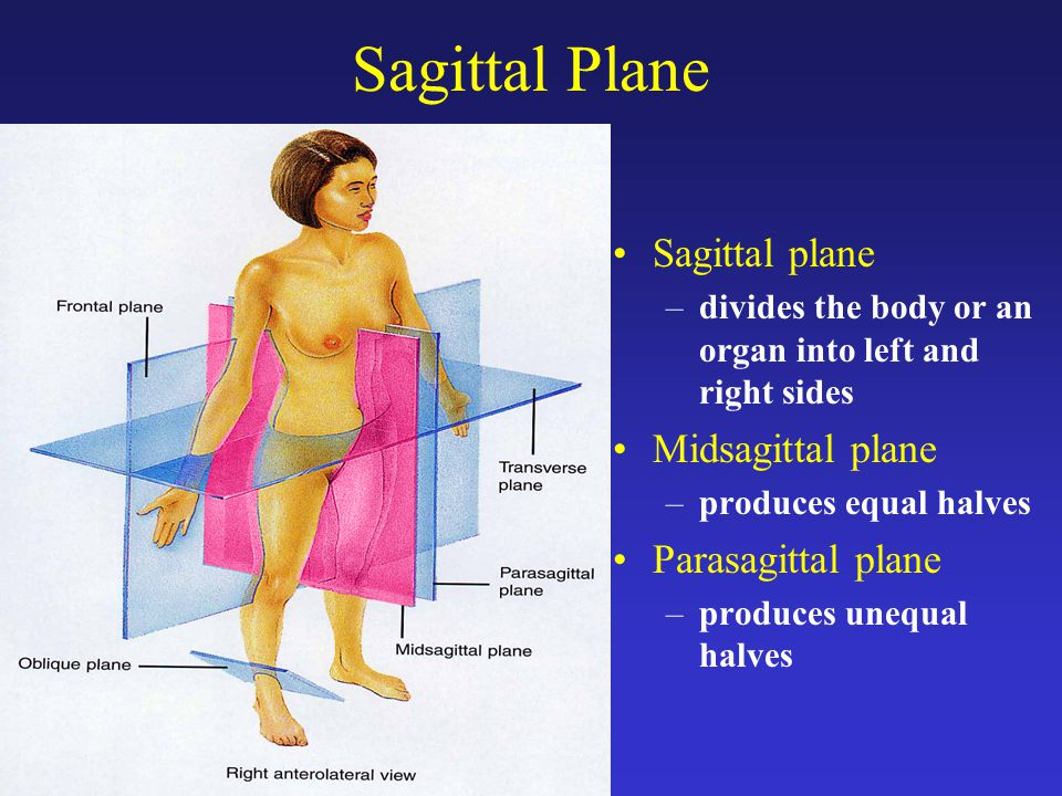 Midsagittal Plane Anatomy