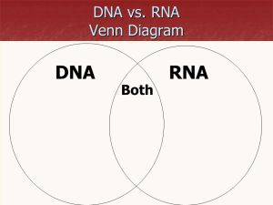 Nucleic Acids DNA vs RNA  ppt video online download