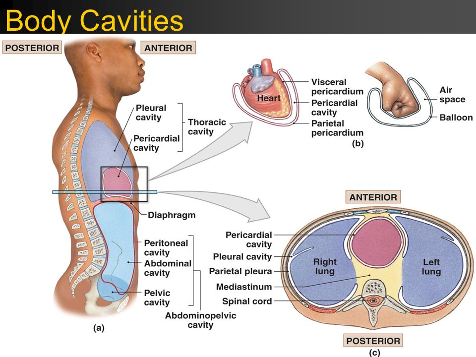 Cavities Are What Body