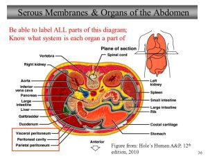 Wele to Biology 101 Human Anatomy & Physiology I  ppt