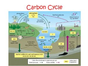 Chapter 2: Energy Flow and Nutrient Cycles Support Life in Ecosystems  ppt video online download