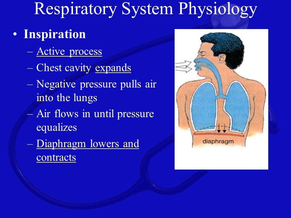 Pulmonary Arterial System