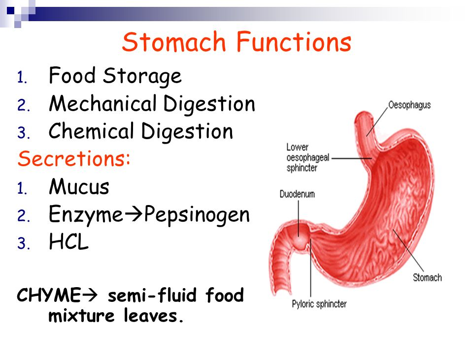Fantastic Epiglottis Function Sketch - Human Anatomy Images ...