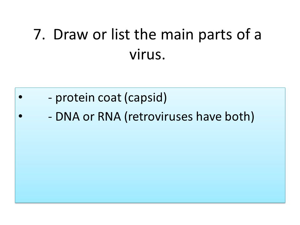 Where What Virus Two Are They Main Are And Parts Virus