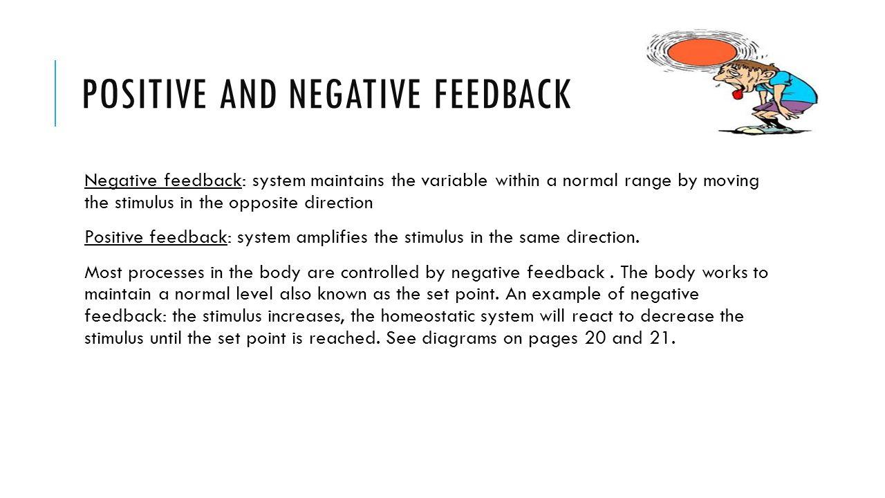 Positive Anatomy And Negative Feedback
