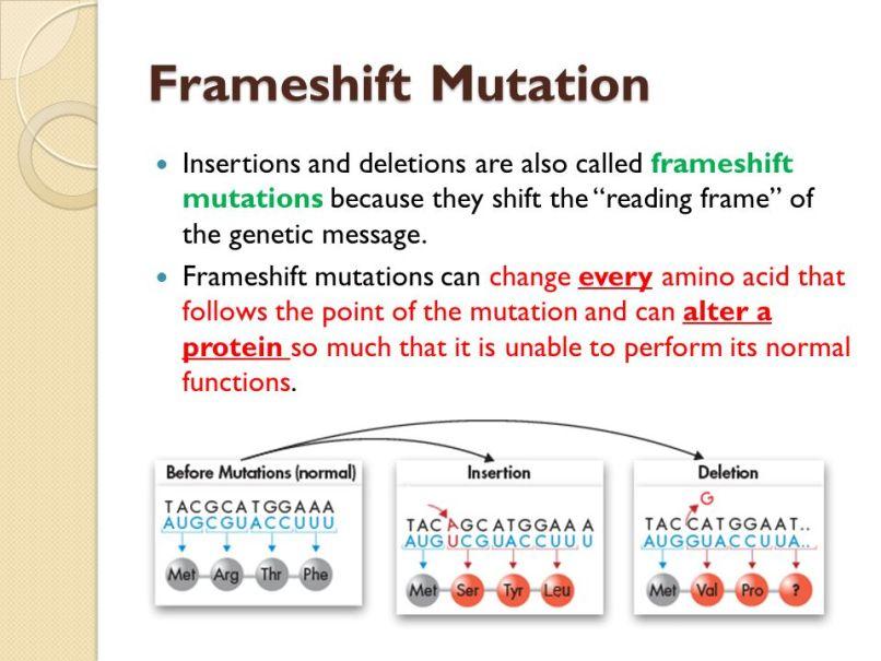 Ungewöhnlich Frameshift Mutation Zeitgenössisch - Rahmen Ideen ...