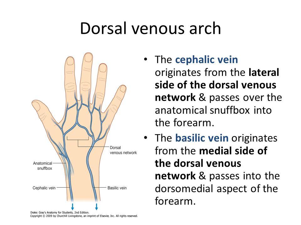Venous Arch Foot Dorsal