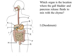 The Digestive System Oral cavity Pharynx Esophagus Liver