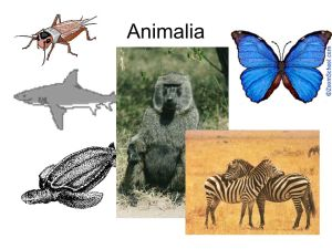 Domains, Kingdoms, and Phyla  ppt video online download