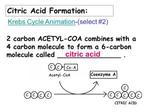 KREBS CYCLE & ELECTRON TRANSPORT Chapter ppt video online download
