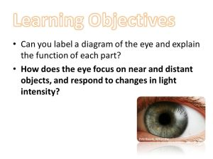 Learning Objectives Can you label a diagram of the eye and
