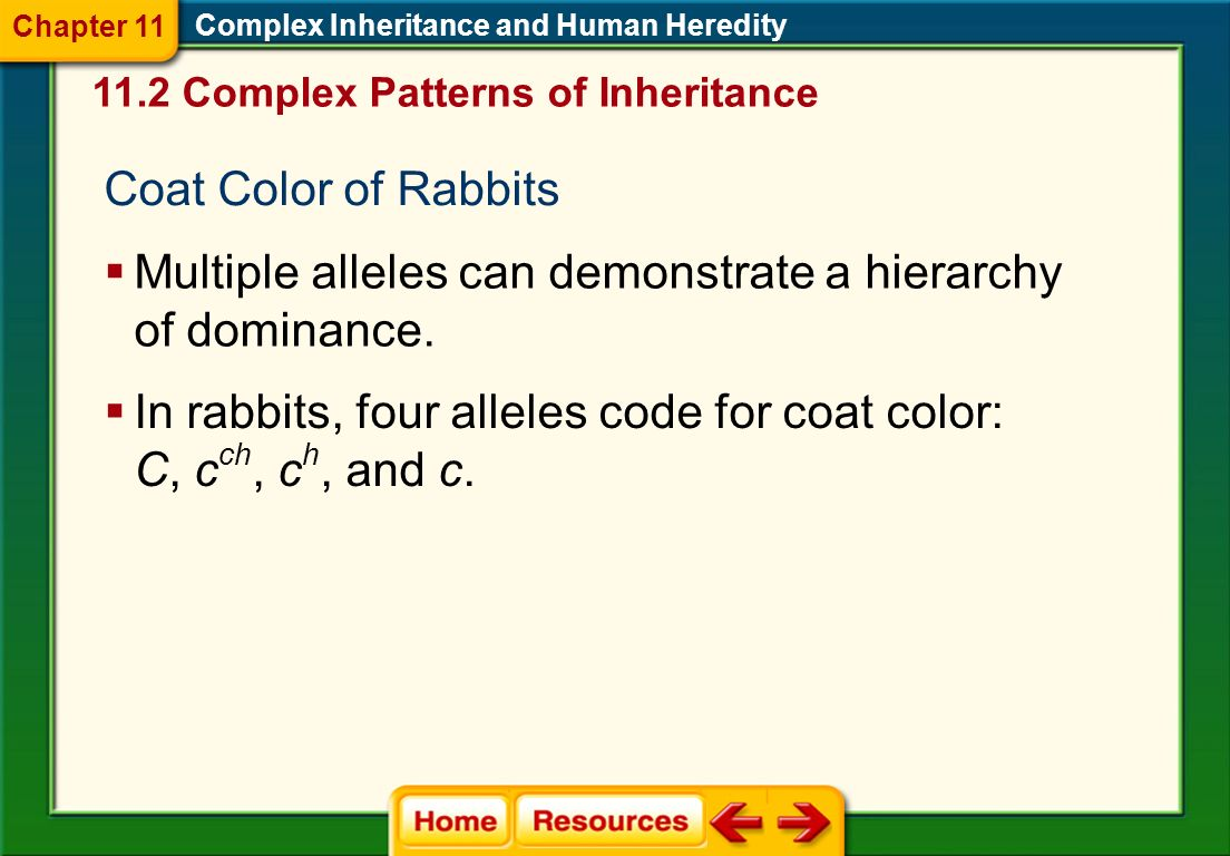 Chapter 11 Complex Inheritance And