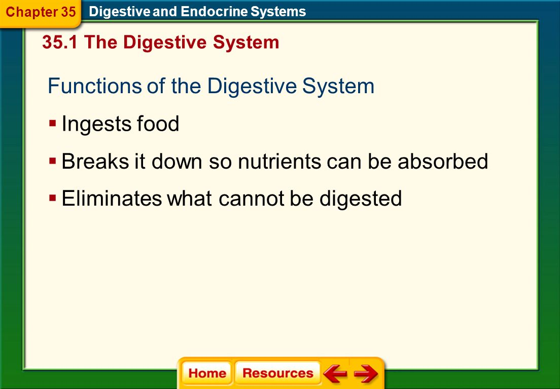Chapter 35 Digestive And Endocrine