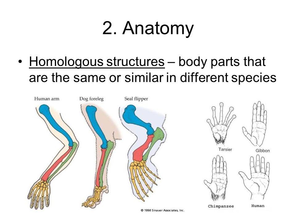 Comparative Anatomy Homologous Structures Gallery Human Anatomy