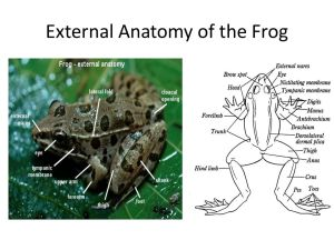 Frog Body Parts and Functions (Know the terms in green)  ppt video online download