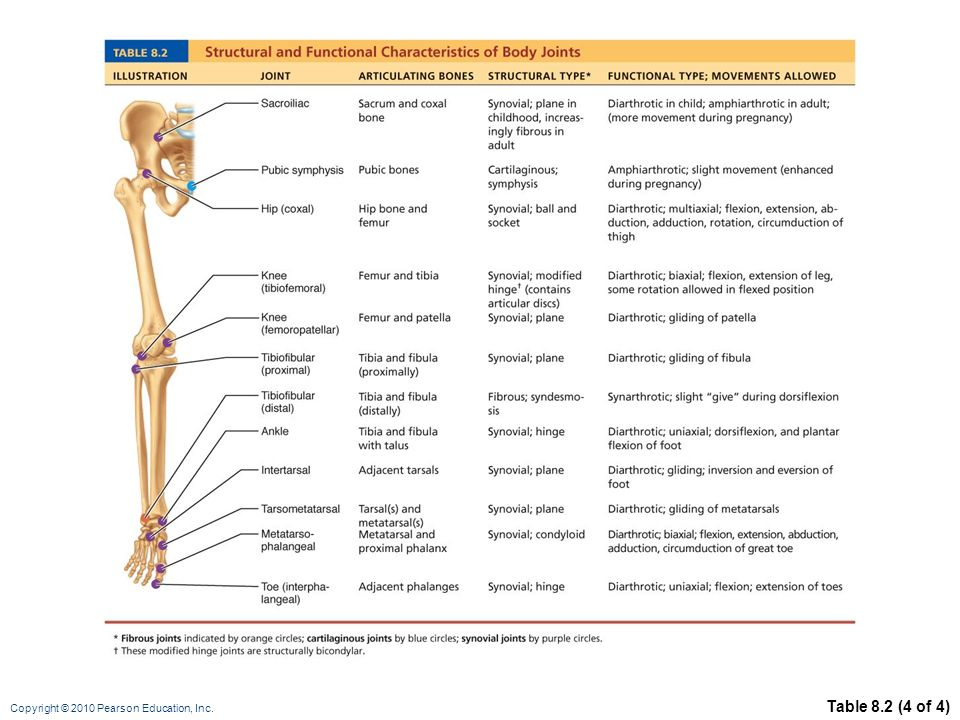 Synovial Joints Of Movement Allowed