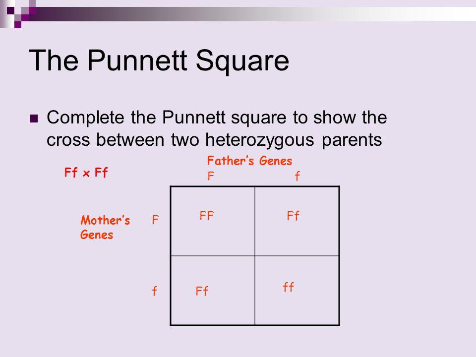 Pure Recessive Square Recessive Pure Punnett And