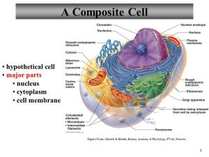 Anatomy and Physiology Cells: The Living Units  ppt video