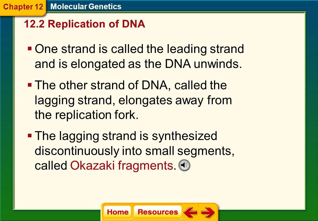 Chapter 12 Molecular Genetics