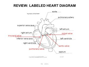 REVIEW: LABELED HEART DIAGRAM  ppt video online download