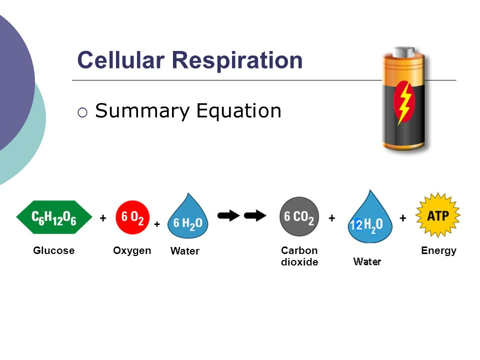 Cell Respiration Word Equation