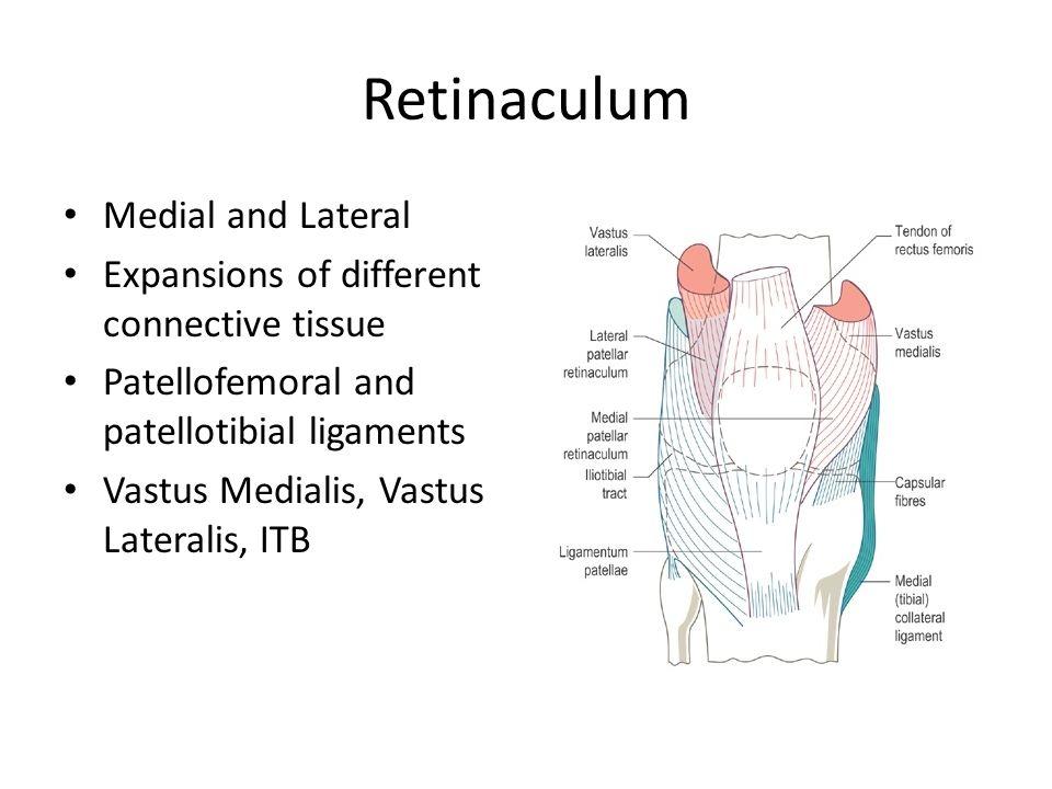 Inferior Medial Patellar Retinaculum