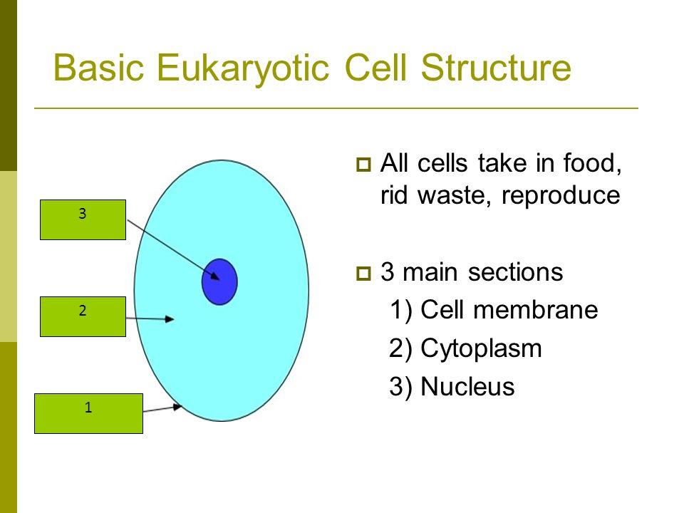 Polar Phospholipid Glycerol Part