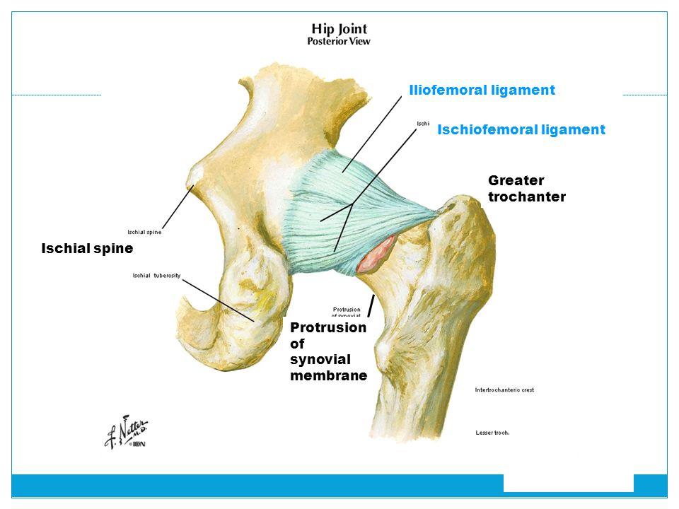 Posterior Superior Iliac Spine Bursa