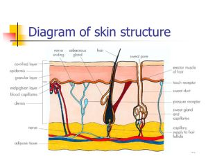 Excretion in Plants and Animals  ppt video online download