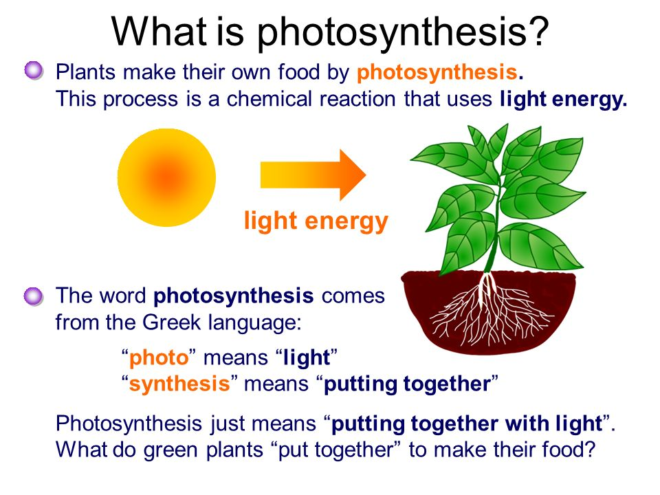 What is photosynthesis? - ppt video online download