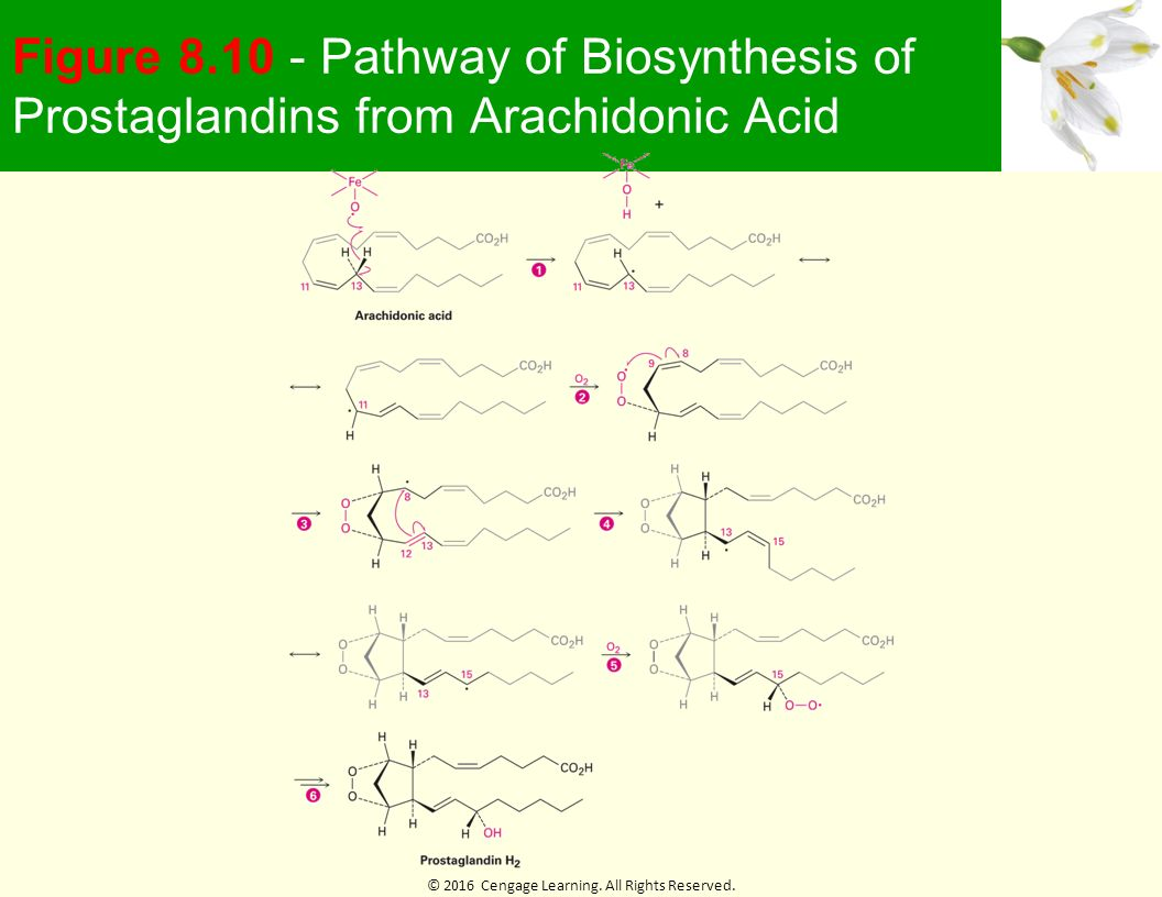Chapter 8 Alkenes Reactions And Synthesis