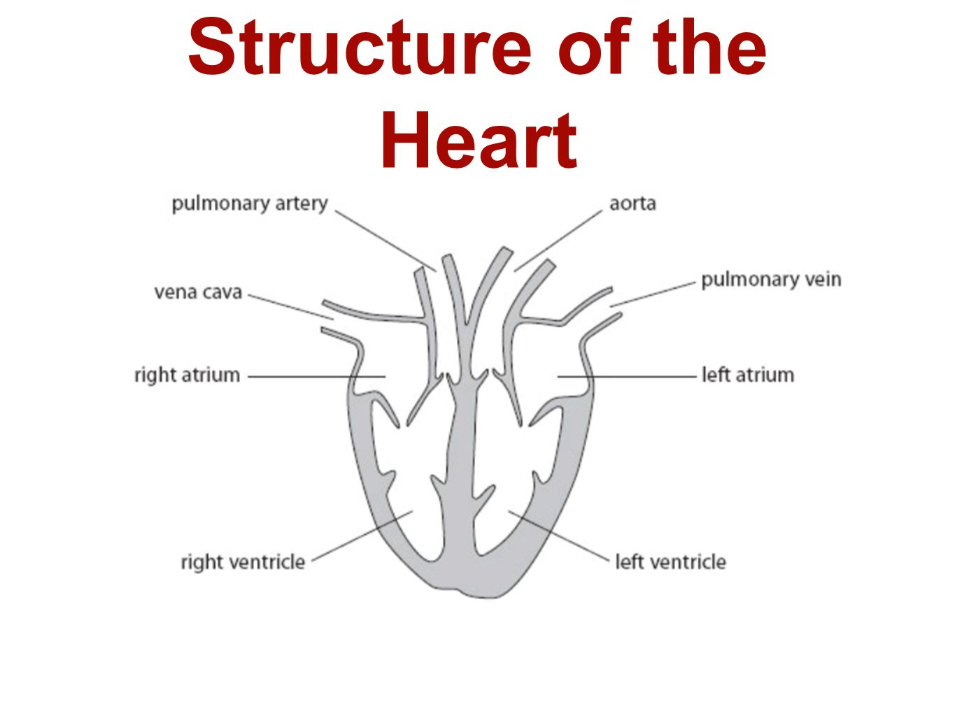 B2 Topic 3 Starter Stick In The Heart Diagram