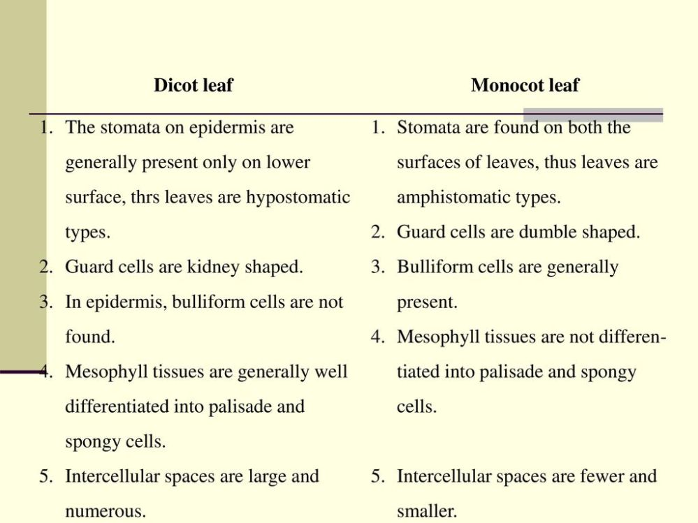 5 Differences Between Monocot Leaf And Dicot | Jidileaf co