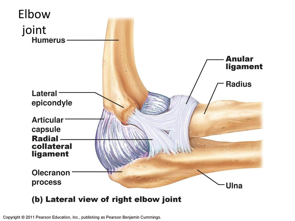 Shoulder Elbow And Wrist