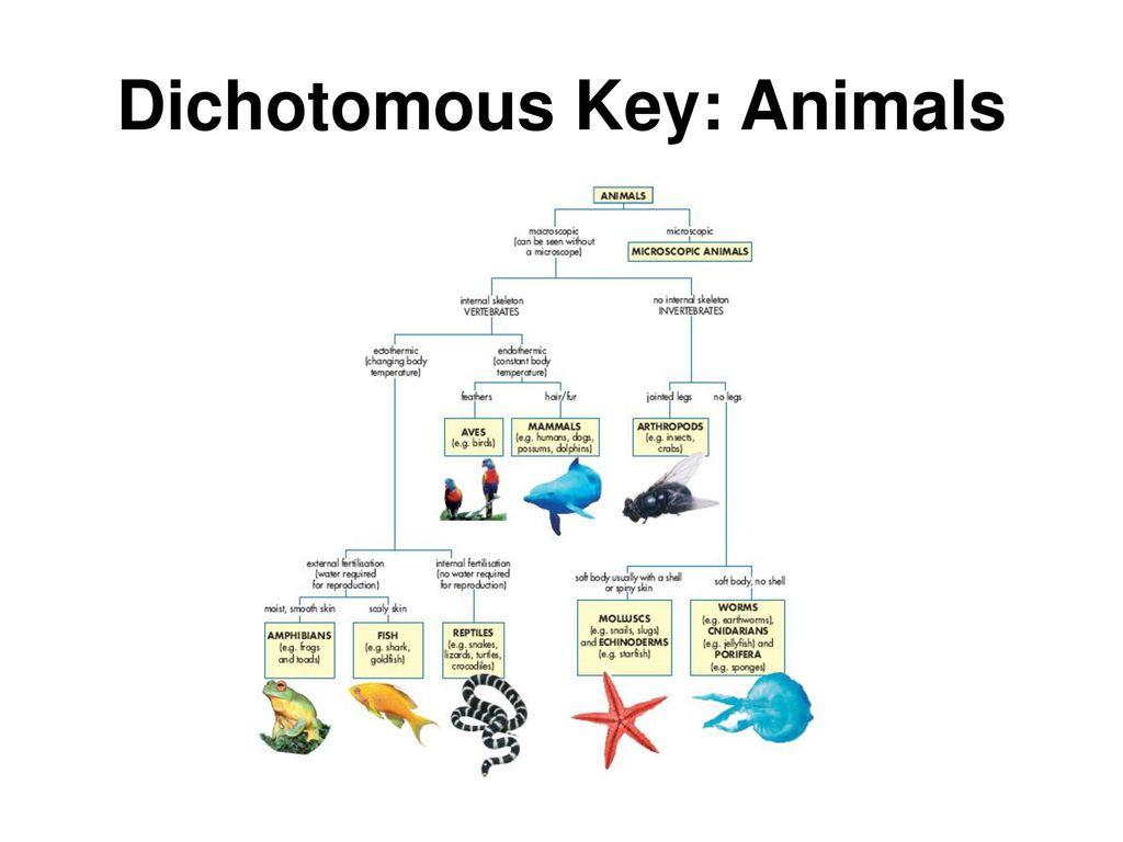 Animal Dichotomous Key