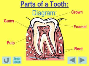 Facts About DENTAL HEALTH!  ppt download