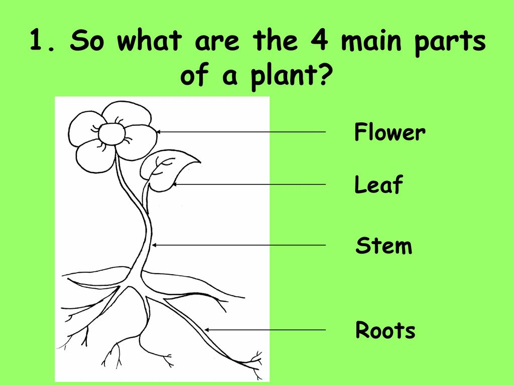 1 Name The 4 Main Parts Of A Plant