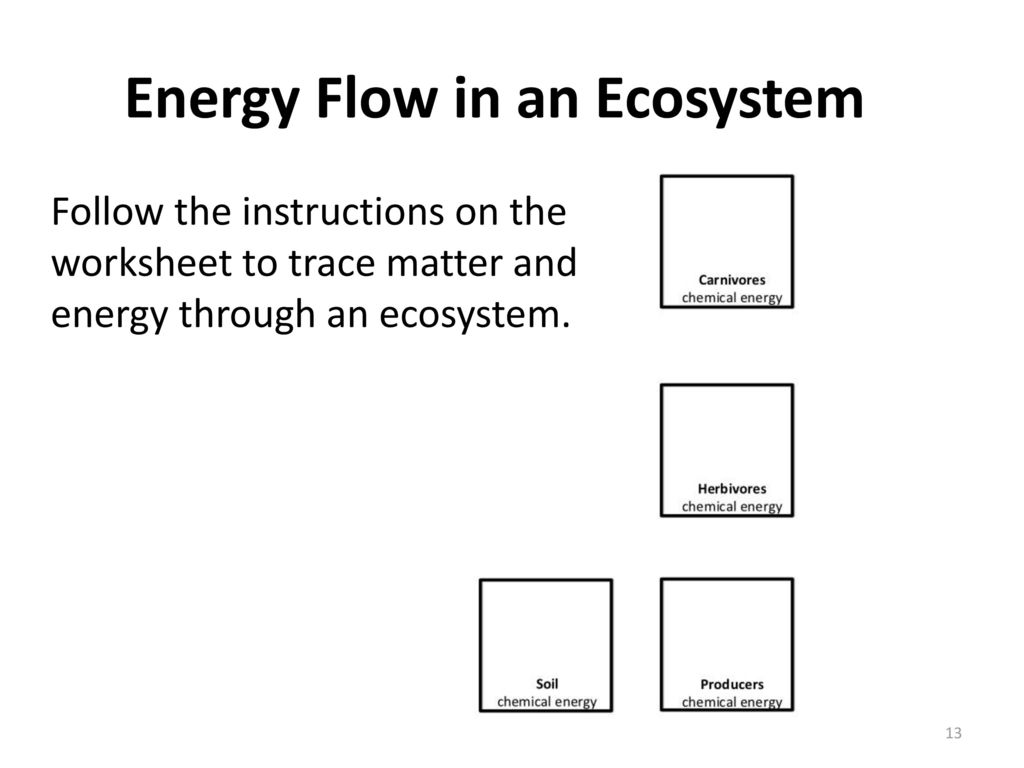 Energy Flow In Ecosystems Worksheet