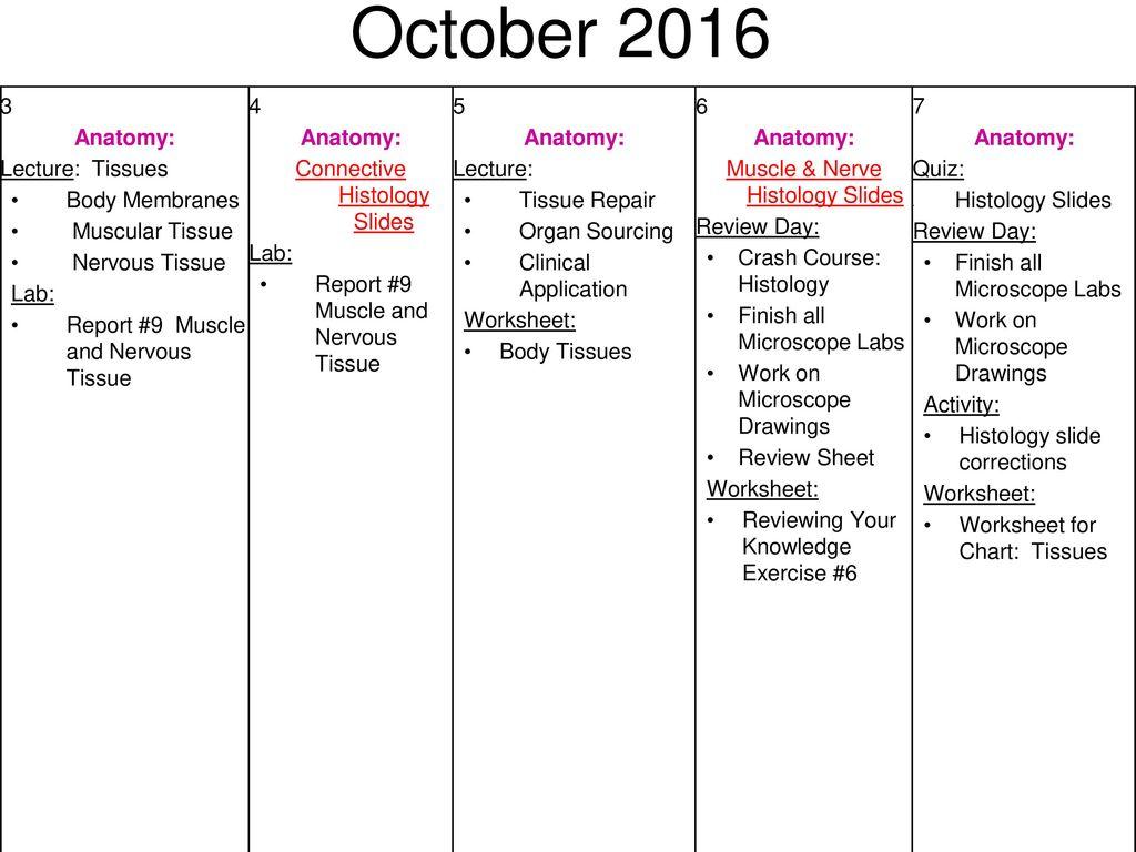 Printables Of Histology Lab Worksheet