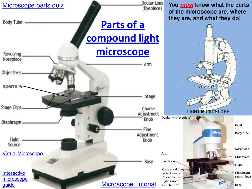 Microscope Parts Quiz Answer Key