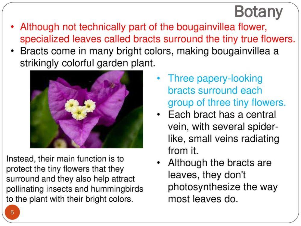 BOUGAINVILLEA (Bougainvillea gabra) PRODUCTION GUIDELINES - ppt download