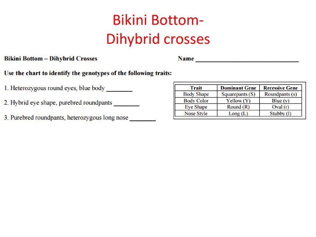 Bikini Bottom Dihybrid Worksheet
