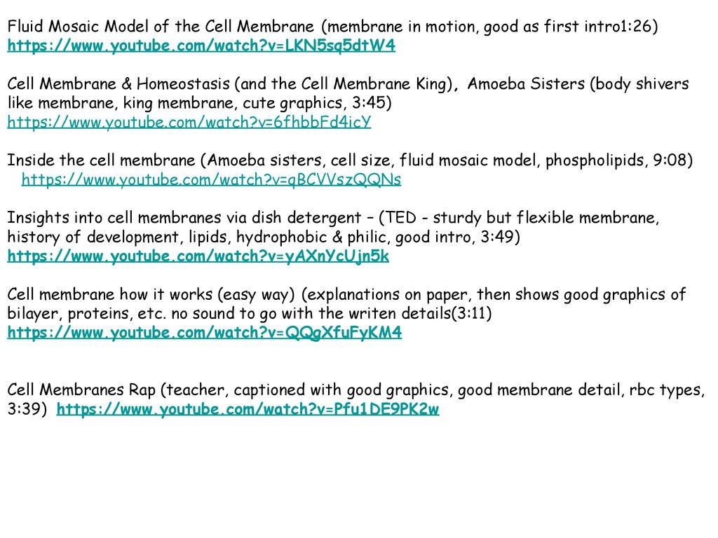 Amoeba Sisters Homeostasis And The Cell Membrane